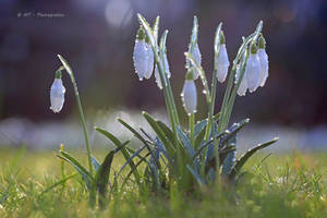 the spring comes by MT-Photografien