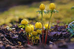 small beauties in winter by MT-Photografien