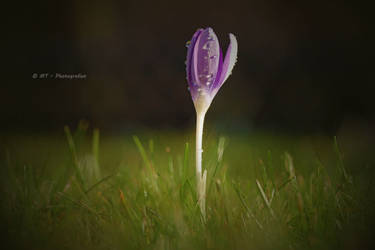 new life comes to light by MT-Photografien