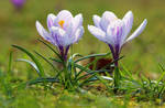 Spring is here by MT-Photografien