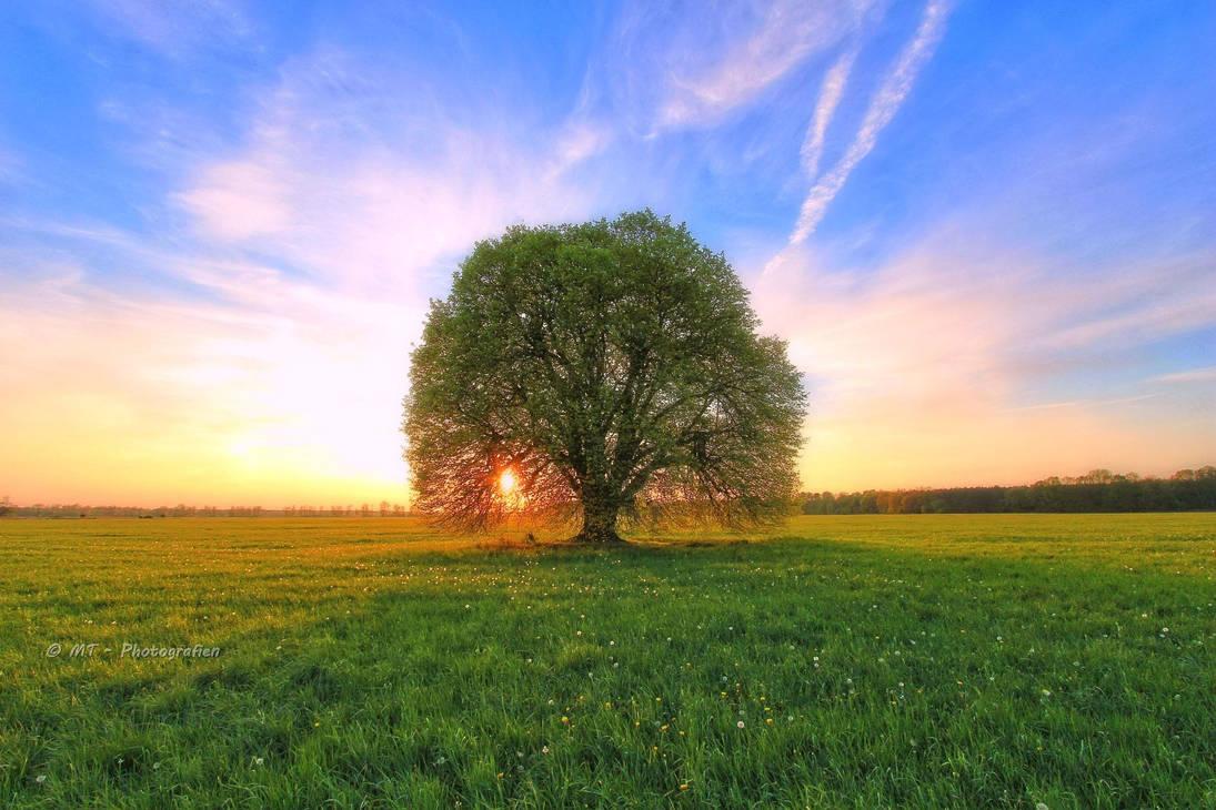 enjoy beautiful nature by MT-Photografien