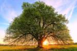 summer linden at spring time by MT-Photografien