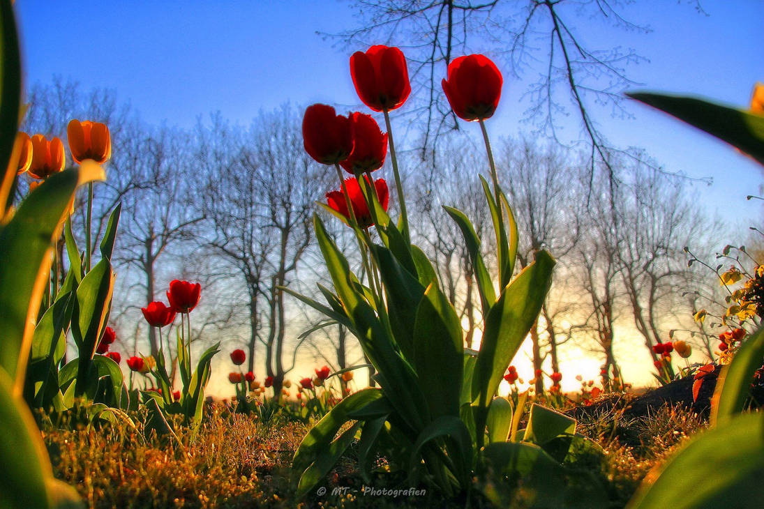 Entry into spring by MT-Photografien