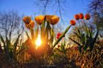 spring magic 2
