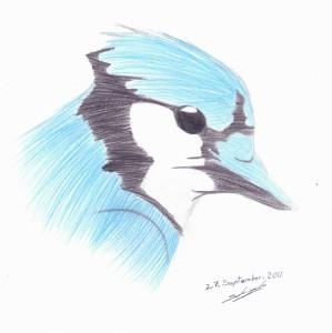 BluejayBandit's Profile Picture
