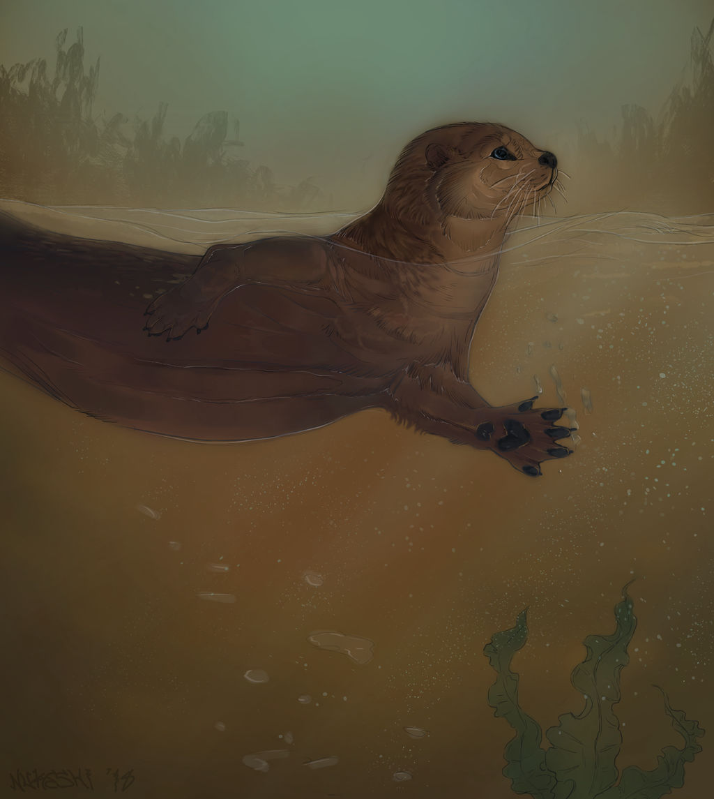 Otter by Nukeshi