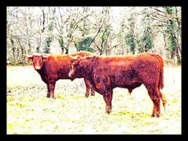 Swiss cows by YumeNoCora