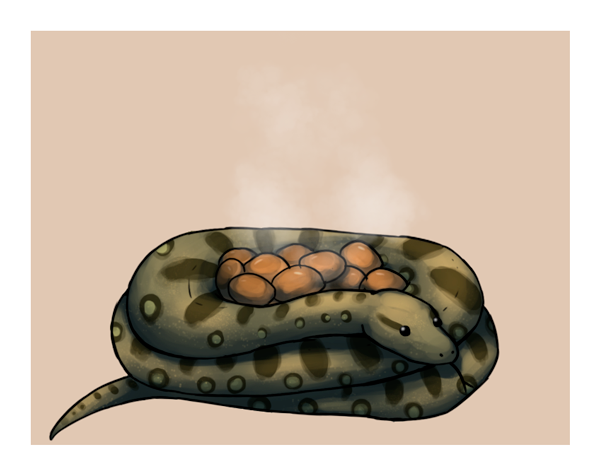 my anaconda doNT by Lykkepillen