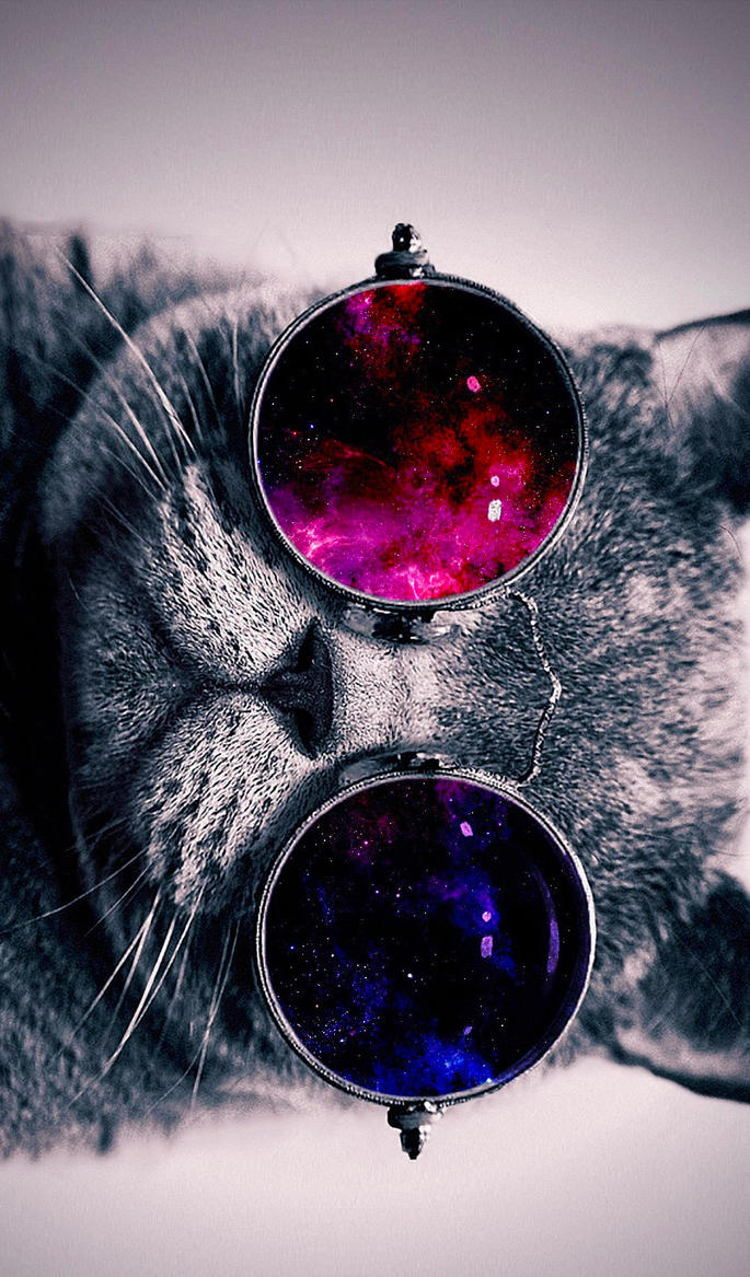 Cat With Cosmos Glasses Animal Hd Wallpaper 19 By