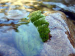 Green leaf and the stone
