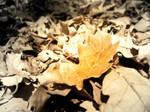 Autumn leaf and the sun