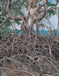 Snead Island Mangroves