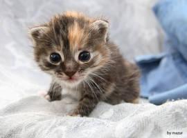 a kitty. by 3digital0