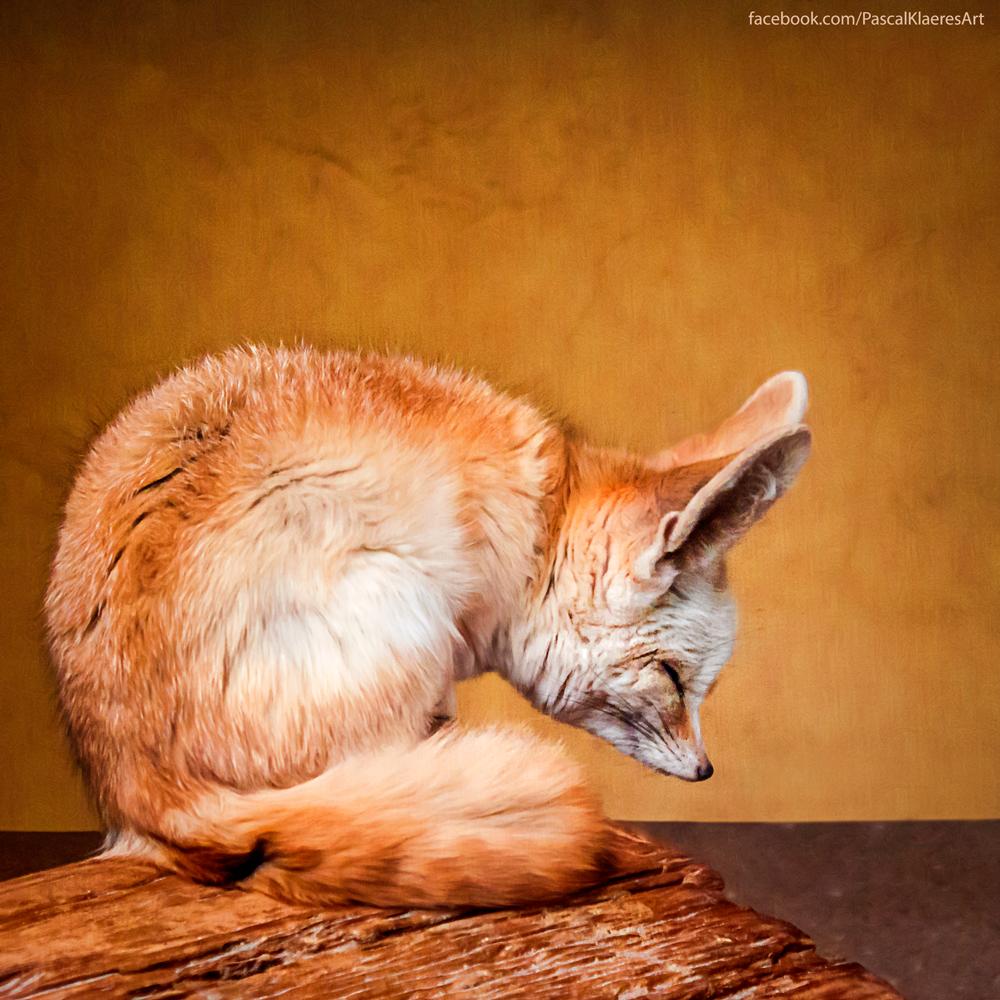 Fox/Fuchs: Fennek by BreeshiO