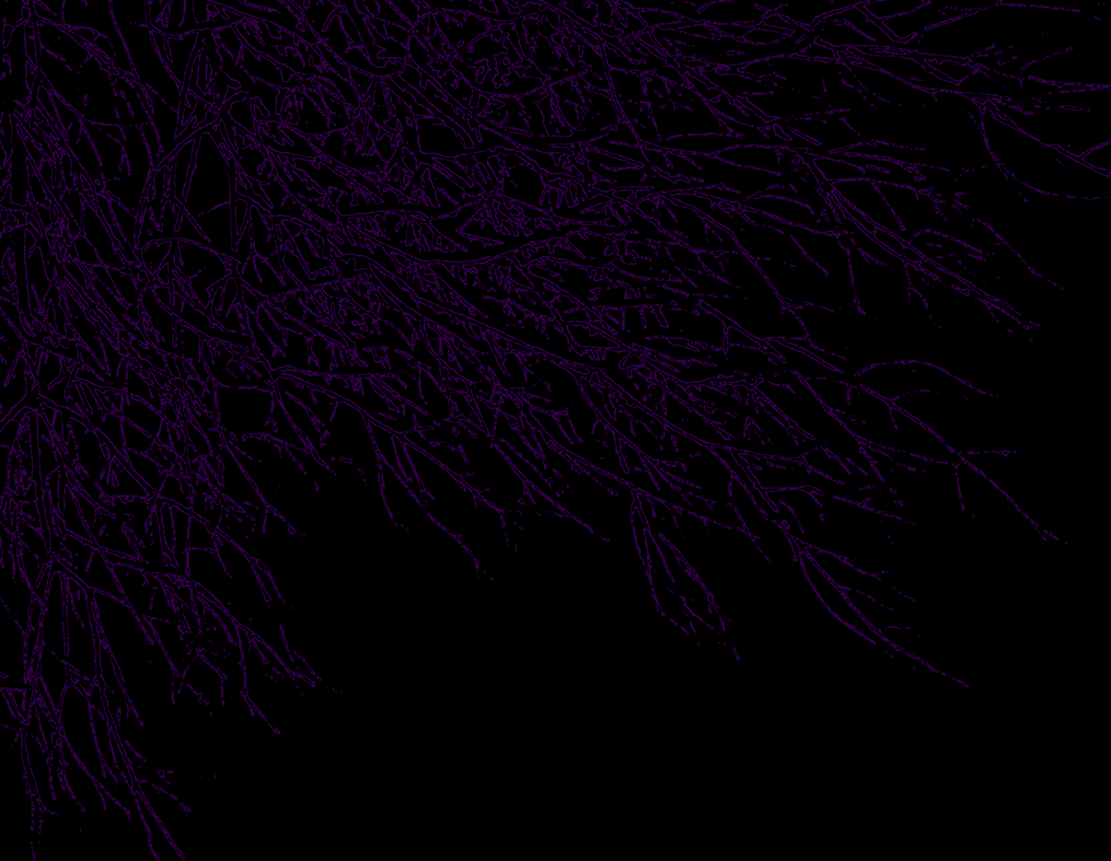 Dark Wallpaper Purple By AHelton84