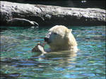 Polar Bear - Again