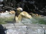Polar Bear - Again, Again