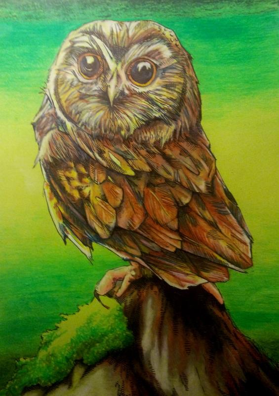 Little owl by A-anarchia