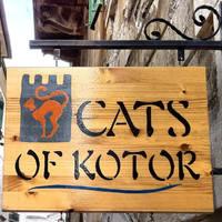 Cats of Kotor-1