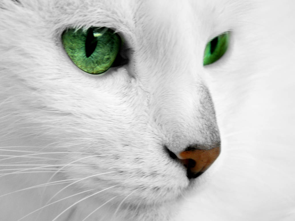 White cat with green eyes by ReconReno