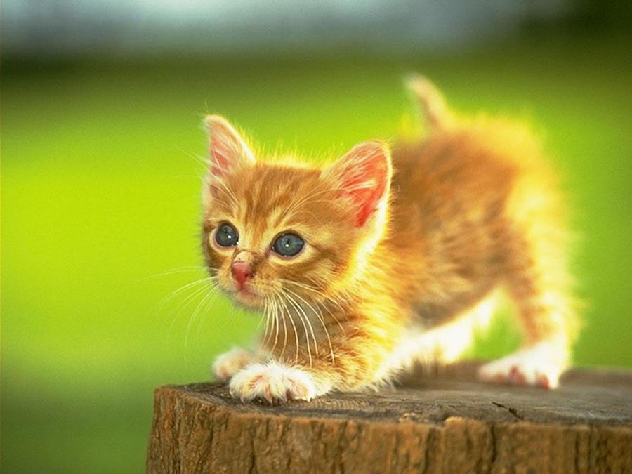 Cute kitten by ReconReno