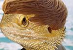 Bearded Dragon Bieber