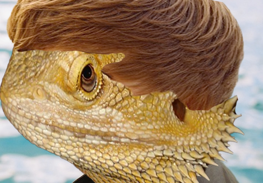Bearded Dragon Care Essential Guide for Beginners  VetBabble