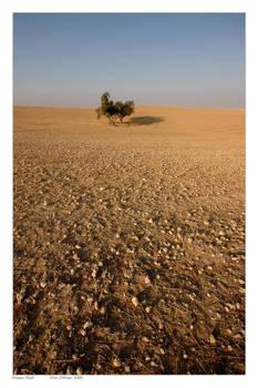 Stones field