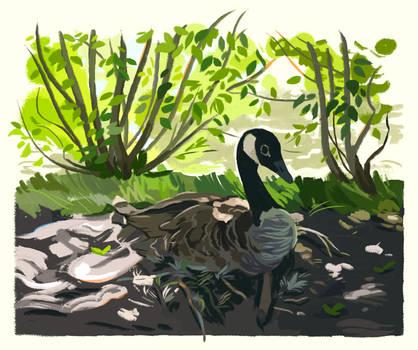 Nesting Goose by uuzon