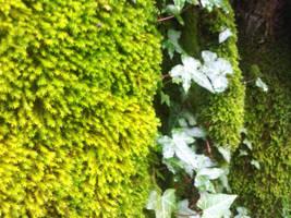lushy greenyness5