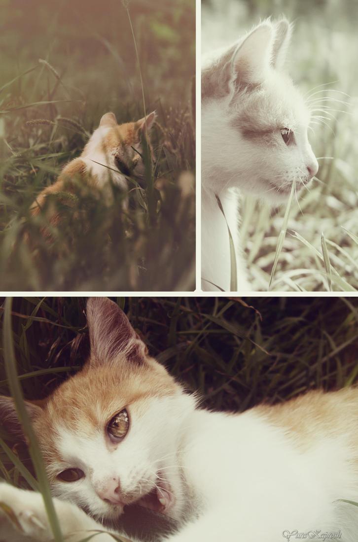 collage cat by YuraKaprosh