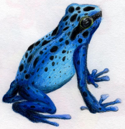 Frogs Coloring Pages Diffuclt