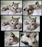 1987 Avanti Lynx Kitten
