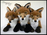 25 inch Red Foxes #1-3