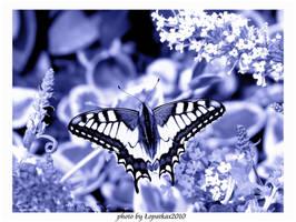 snowy butterfly.. by lopatkax