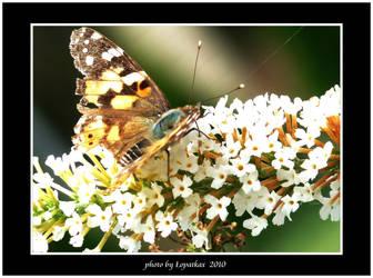 Flower breakfast.. by lopatkax