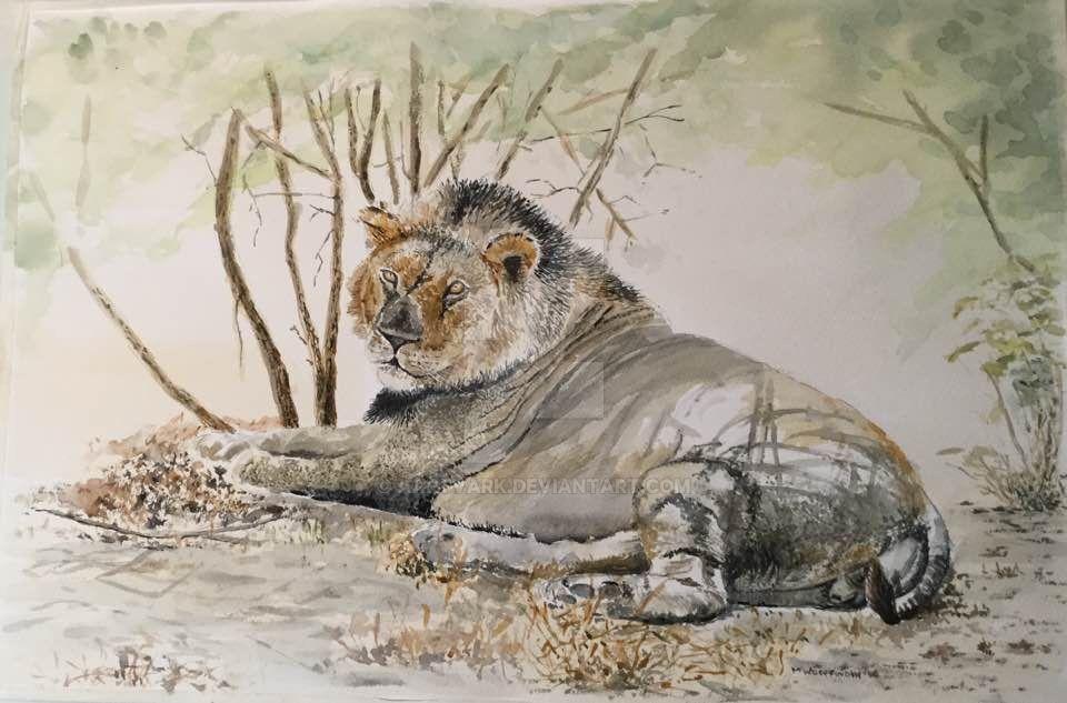 ZImbabwe Lion by aartvark