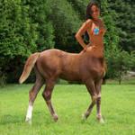 Centaur filly