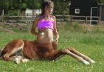 Foal centaur