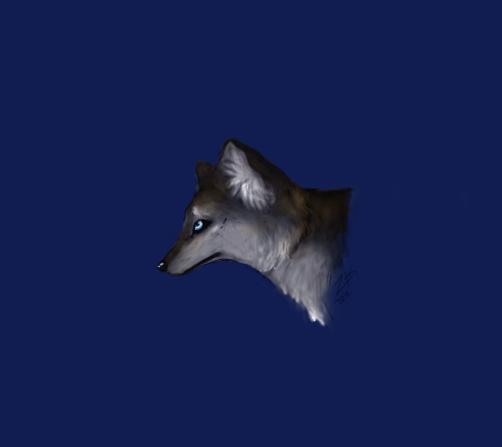 Wolf Head by zeraan