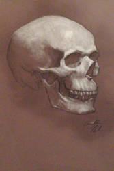 Skull in White by Vanilla12789
