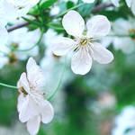 #6 Spring