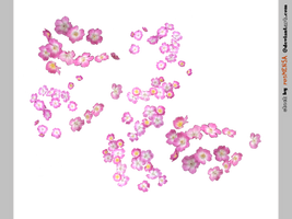 rose...png STOCK by resMENSA