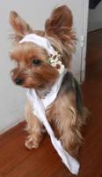 Gypsy, cute dog photos