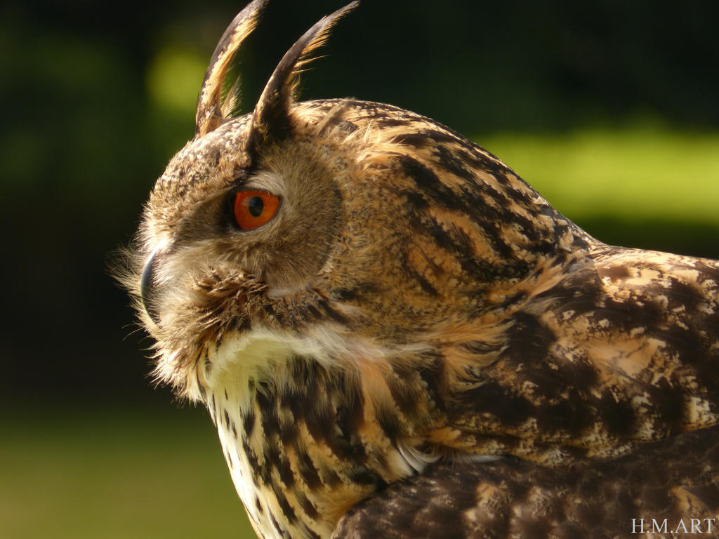 Great Horned Owl by Marmiexx