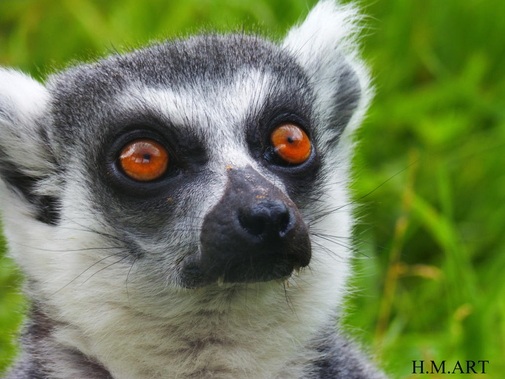 Lemur by Marmiexx