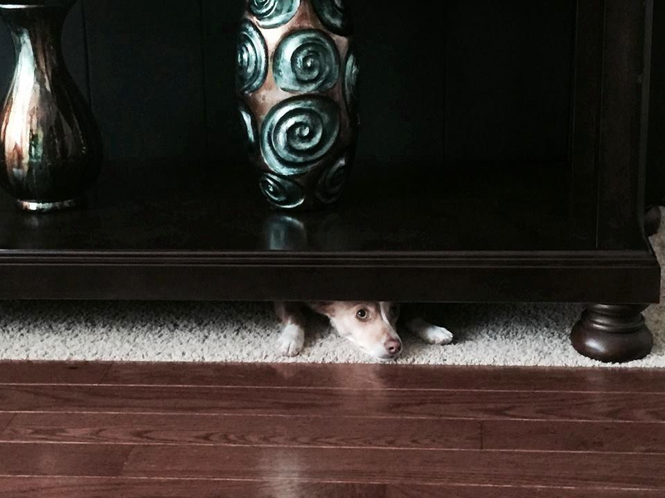 Nico is Stuck!