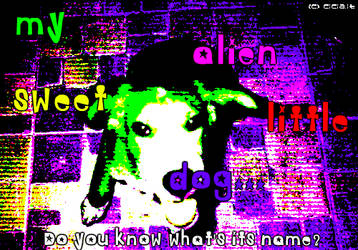 my sweet alien little dog...