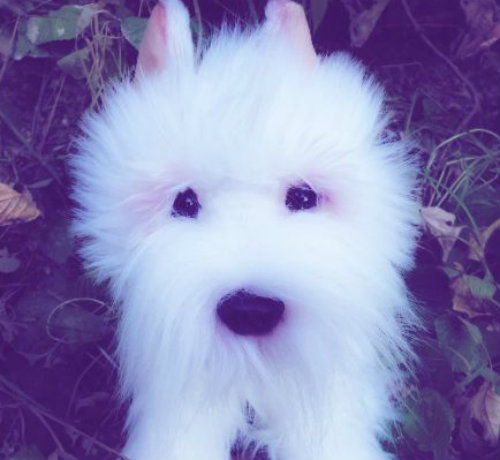 ~Webkinz Signature West Highland Terrier Icon~ by ...