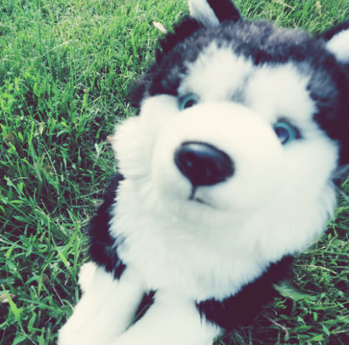 webkinz husky dating Find great deals on ebay for webkinz plush shop with confidence.